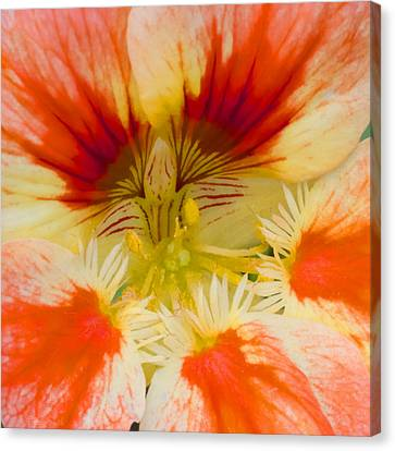 Canvas Print featuring the photograph Ink Blot by Heidi Smith