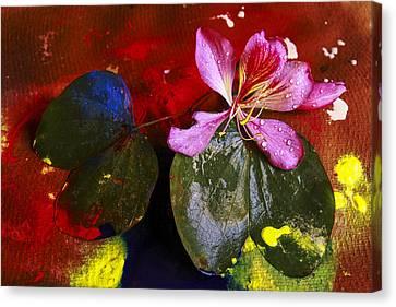Inner Joy Canvas Print by Rohan Sandhir
