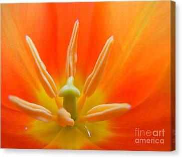 Inner Light Canvas Print by Agnieszka Ledwon