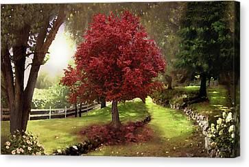 Red Leaf Canvas Print - Inner Sanctuary by David M ( Maclean )