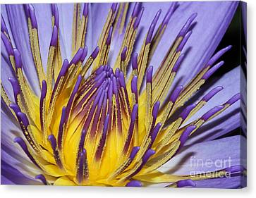 Canvas Print featuring the photograph Inner Sanctum by Judy Whitton