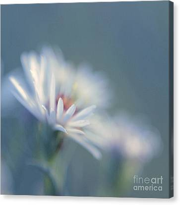 Innocence 03c Canvas Print by Variance Collections