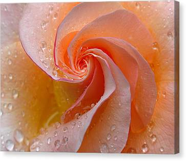Innocent Beauty Canvas Print by Juergen Roth