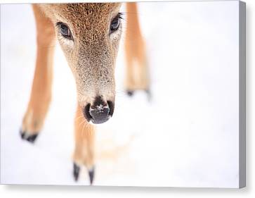 Innocent Eyes Canvas Print