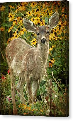 Canvas Print featuring the photograph Innocent Fawn And Flowers by Peggy Collins