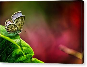 Innocent To This World Canvas Print