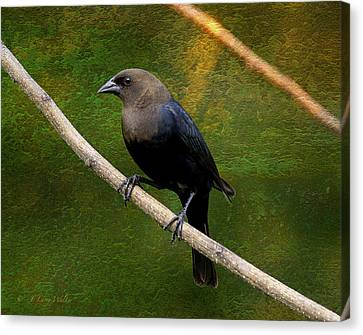 Canvas Print featuring the digital art Inquisitive Cowbird by J Larry Walker