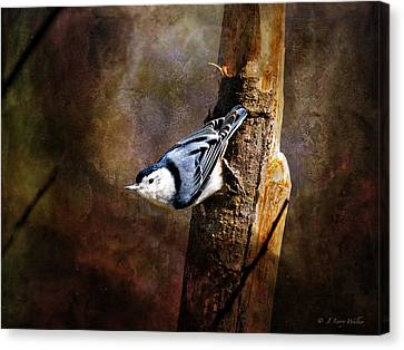 Canvas Print featuring the digital art Inquisitive Nuthatch by J Larry Walker