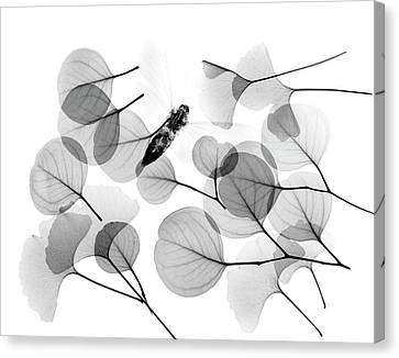 Insect And Plant Leaves Canvas Print by Albert Koetsier X-ray