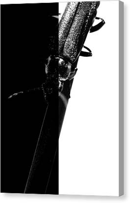 Insect In Black And White Canvas Print by Tommytechno Sweden