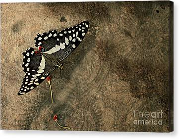 Insect Study Number 30 Canvas Print by Floyd Menezes