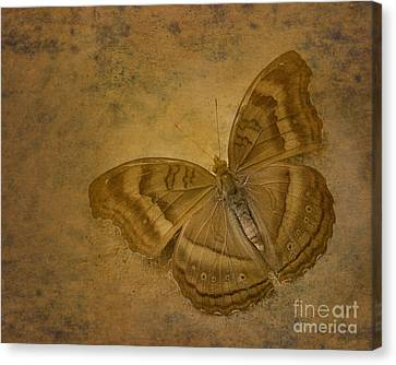 Insect Study Number 94 Canvas Print by Floyd Menezes