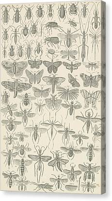 Insects Canvas Print by English School