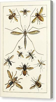 Insects Canvas Print by King's College London