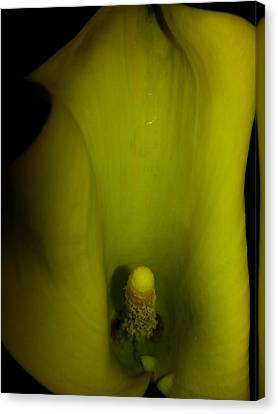Inside A Lily Canvas Print