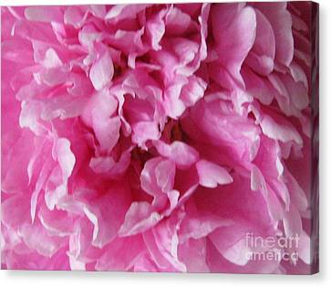 Canvas Print featuring the photograph Inside A Pink Peony by Margaret Newcomb