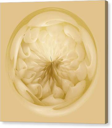 Inside A Sea Shell Orb Canvas Print by Paulette Thomas