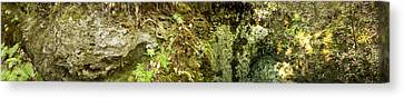 Sink Hole Canvas Print - Inside A Sinkhole Panorama by Rich Leighton