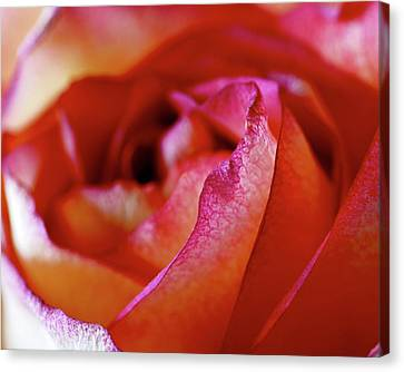 Inside Edge Canvas Print by Rona Black