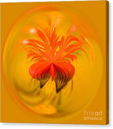 Inside Out Nasturtium Canvas Print by Anne Gilbert