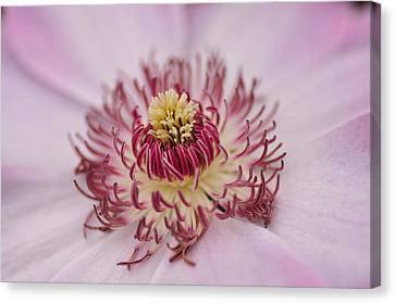 Canvas Print featuring the photograph Inside The Flower by Mike Martin