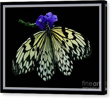 Inspired By Butterflies  Canvas Print by Inspired Nature Photography Fine Art Photography