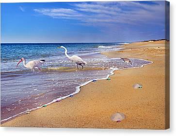 Inspiring Ibis Egret Sandpiper Starfish Sand Dollars  Canvas Print by Betsy Knapp