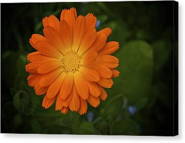 Intense Orange Canvas Print by Terry Horstman