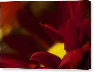 Intense Red Canvas Print by Terry Horstman