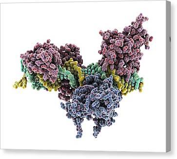 Interferon-dna Transcription Complex Canvas Print by Science Photo Library