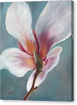Intimate Apparel Canvas Print by Sandi Whetzel