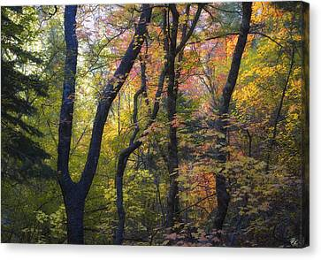 Intimate Forest Canvas Print by Peter Coskun