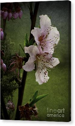 Canvas Print featuring the photograph Into Spring by Lori Mellen-Pagliaro