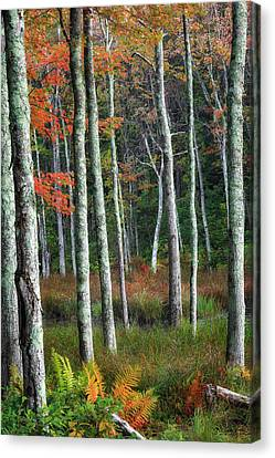 Into The Autumn Forest Canvas Print by Bill Wakeley