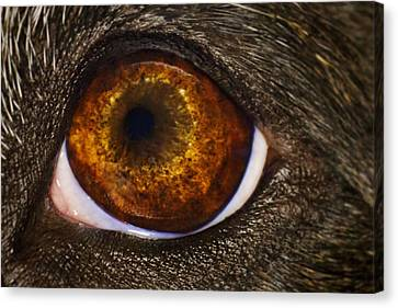 Canvas Print featuring the photograph Into The Eye Of The Pit by Brian Cross