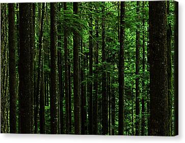 Exhilarating Canvas Print - Into The Forest Darkly by Connie Handscomb