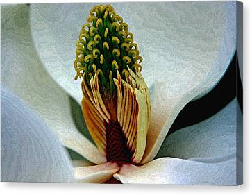Into The Heart Of The Magnolia Drybrush Canvas Print
