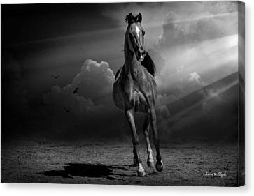 Forelock Canvas Print - Into The Light by Karen Slagle