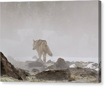 Canvas Print featuring the photograph Into The Mist by Yeates Photography