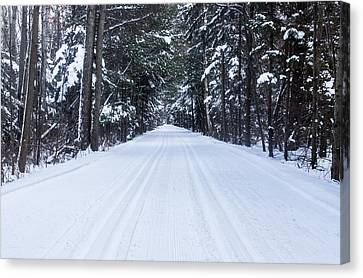 Into The Snowy Pines Canvas Print