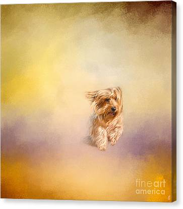 Into The Wind Canvas Print by Jai Johnson
