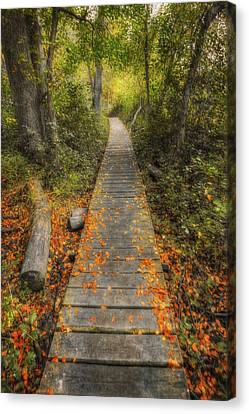 Into The Woods - Retzer Nature Center - Waukesha Wisconsin Canvas Print by Jennifer Rondinelli Reilly - Fine Art Photography