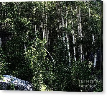 Into The Woods Canvas Print by Bedros Awak