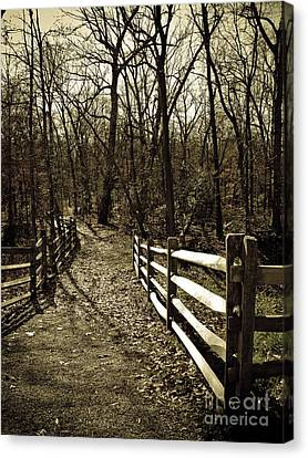 Into The Woods In Sepia Canvas Print