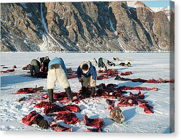 Inuit Hunters Butchering A Walrus Canvas Print by Louise Murray