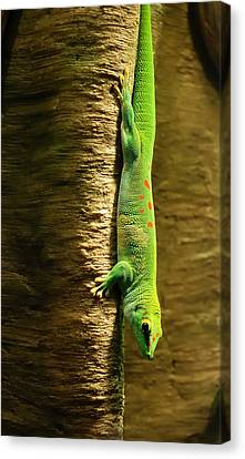 Inverted Gecko Canvas Print by Jim Hughes