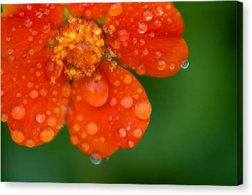 Invigorating Canvas Print by Matt Dobson