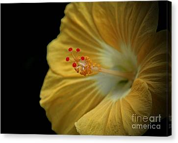 Invitation To Beauty Hibiscus Flower  Canvas Print by Inspired Nature Photography Fine Art Photography