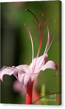 Plant Canvas Print - Inviting Reach  by Neal Eslinger