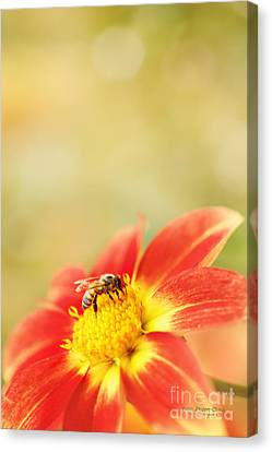 Inviting Canvas Print by Beve Brown-Clark Photography